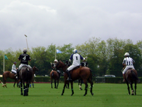 A polo competition, horses behind in Deauville-la-touque